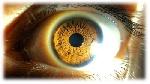 177864x150 - سمینار آماده: تشخیص هویت با استفاده از ویژگی کف دست و عنبیه چشم (143 صفحه فایل ورد و قابل ویرایش)